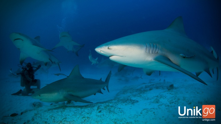 Scuba dive with bullsharks at Playa del Carmen, Mexico: Carmen Goldsmith, Playa Del Carmen, Scuba Dive, Scubas Diving, Riviera Maya