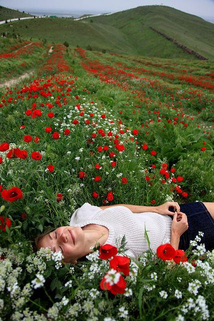 Poppies . Ashgabat, Turkmenistan