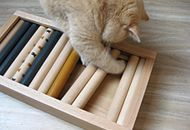 Futter-Intelligenzbox für Katzen selber bauen