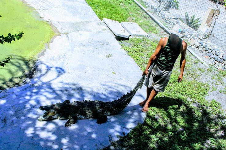 www.tropicalcubanholiday.com Crocodile Vacation Cuba Excursion Apartment