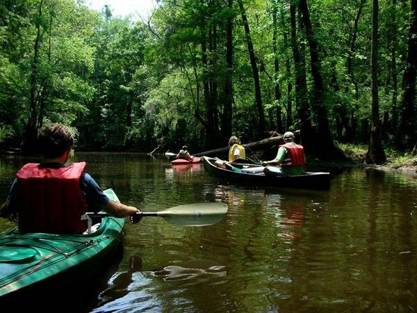 The 58 National Parks in the USA(*13): Congaree National Park