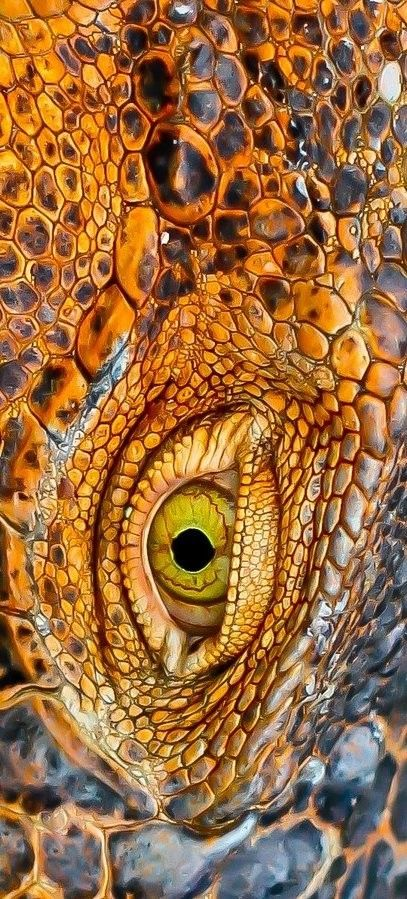 Orange | Arancio | Oranje | オレンジ | Colour | Texture | Style | Form |  Macrojo, picture by Alvaro  Cubero Vega