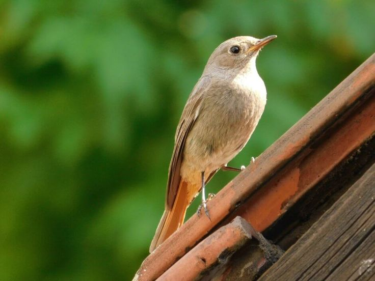 30 Best Bird Control For Commerical Businesses Images On