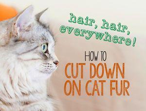 Hair, Hair Everywhere! How to Cut Down on Cat Fur | eBay