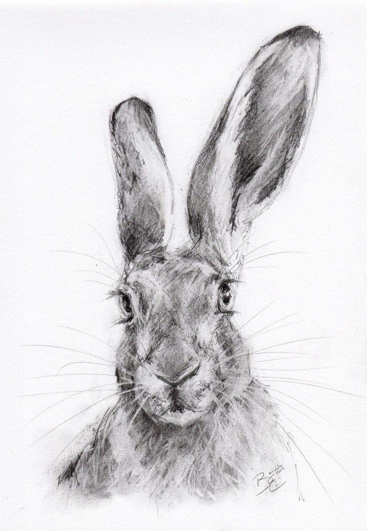 ORIGINAL-A4-Wildlife-Pencil-Sketch-of-a-HARE.jpg (1106×1600)
