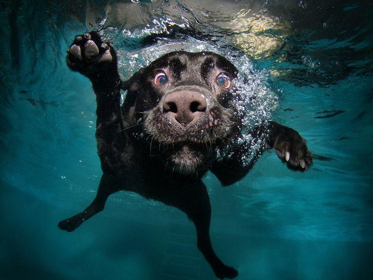 Tá na hora de dar banho no filhote? Veja os cuidados na hora de dar banho em filhotes de cachorro. Dicas para escolha do shampoo e inseticida anti pulgas