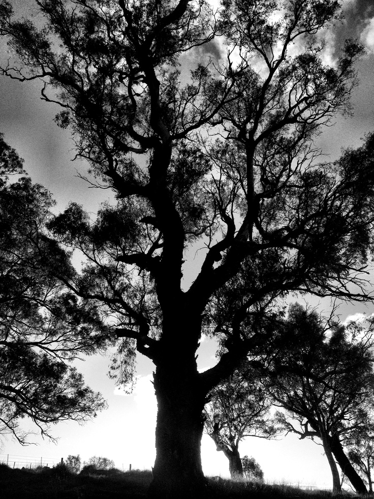 Black and White. #photography #blackandwhite #tree