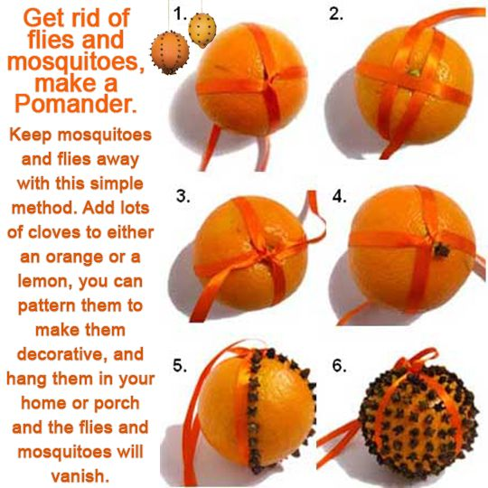 wiccateachings:  Make a clove Pomander, hang to help with respiratory issues, as an air freshener and as a bug repellent.If you're having i...