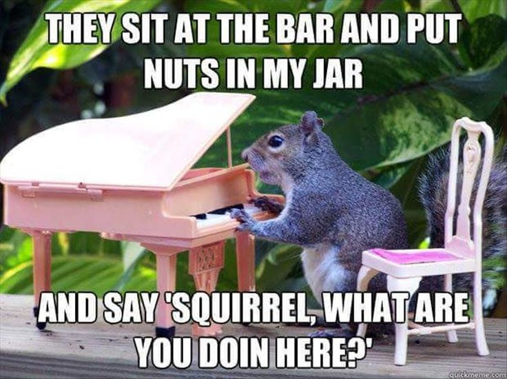 1000 Ideas About Funny Squirrel On Pinterest Squirrel