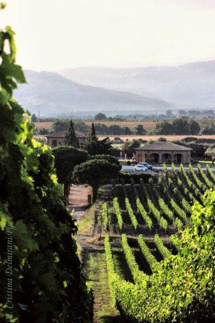 Poggio al Tufo Vineyard in Pitigliano - Tuscany #Tommasiwine www.poggioaltufo.it