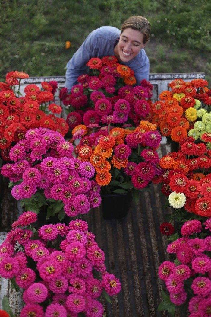 """Zinnias. Johnny's Select Seed. Sun annuals. Cut flowers. Pinch back center flowers at 18"""" tall to encourage low branching & longer stems."""