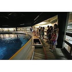 Oklahoma, Aquarium and Scene on Pinterest