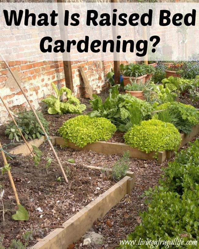 Find Out What Raised Bed Gardening Is And Why It Is Beneficial To Have In  Many