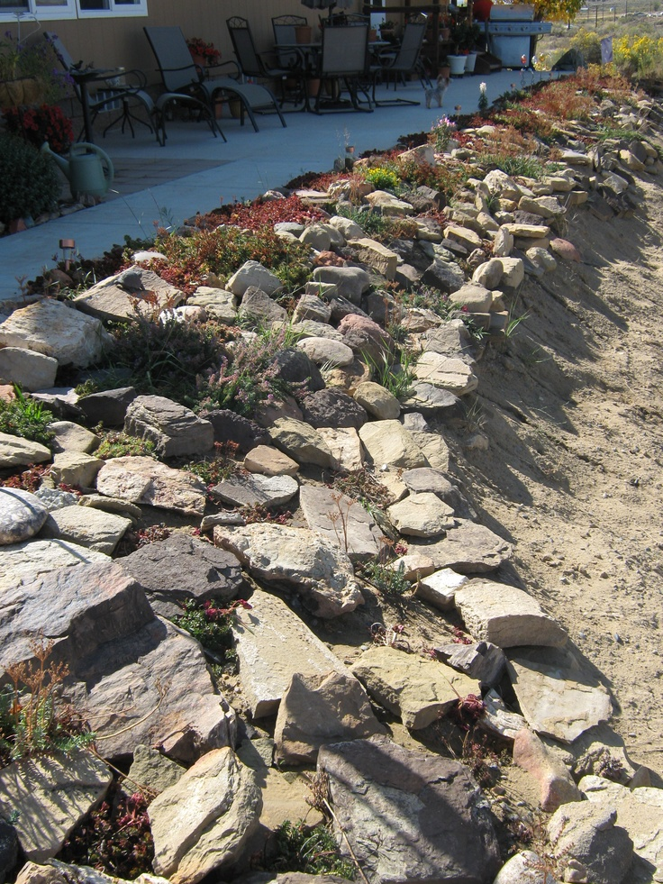 1000 images about ground cover ideas on pinterest for Landscaping rocks on a hill