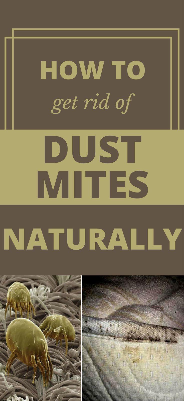 777 Best Dust Mite Images On Pinterest Dust Mites