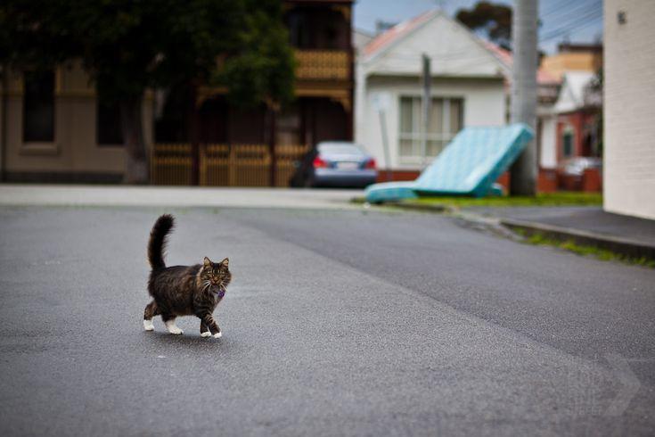 Cat crossing | MelbourneStreet | 06 Aug 2011
