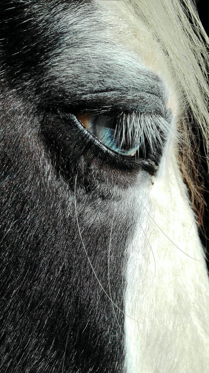 What a shot! Kind blue horse eyes.