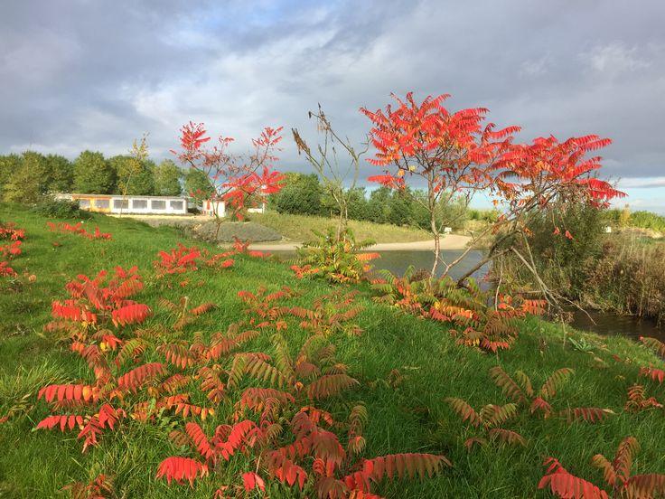 Herft op NetlPark#herfstkleuren#fluweelboom