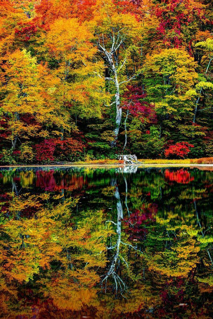 Autumn leaves at Karikomi Pond, Fukui, Japan