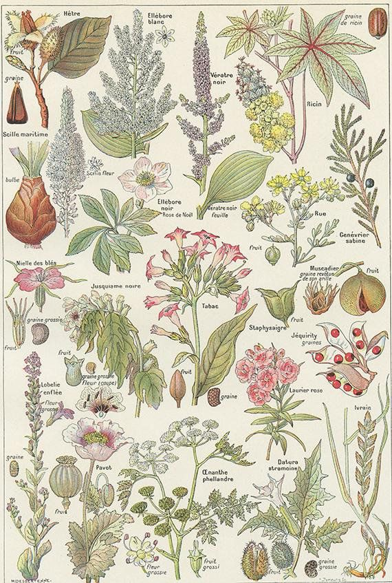 Lovely Small Vintage Poster Showing Dangerous Plants With French