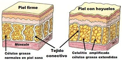 bebida para disminuir la celulitis - 1 toronja/pomelo grande 2 naranjas 1/4 limón jengibre (una pieza de tamaño mediano)