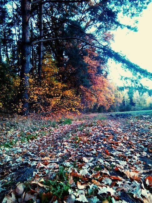 Jesień - autumn :-) colors