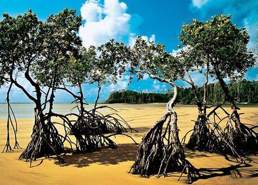Banhada pelo Oceano Atlântico e pelos rios Amazonas e Tocantins, a Ilha do Marajó é a principal ilha do maior arquipélago fluviomarinho do planeta e abriga praias semi desertas e manguezais. Conheça!