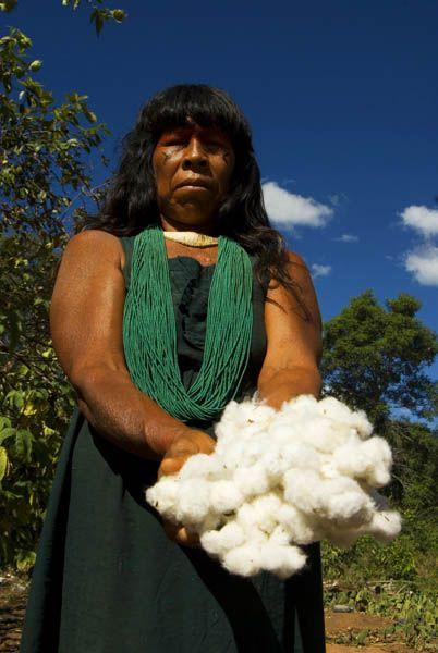 Etnia Kalapalo/ Parque Indigena do Xingu   Mulher Kalapalo colhendo algodão rustico, usado para tecer fios para artesanato, como colares e redes.  Aldeia Kalapalo / Alto Xingu - MT - 2009  © Renato Soares / Imagens do Brasil