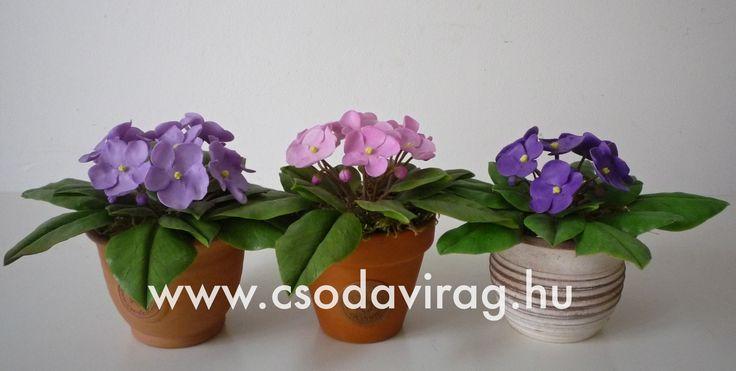 Saintpaulia (Fokföldi ibolya) - My clay flower https://www.facebook.com/Csodavirag