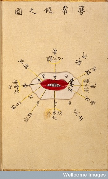 """""""This illustration shows the mouth and identfies the sections the sections of the lips supposedly relating to the condition of various parts of the body."""" 1788 By: Ikeda Zuisen"""