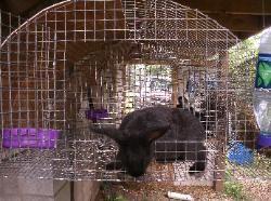 Farm Stuff rabbit cage plans