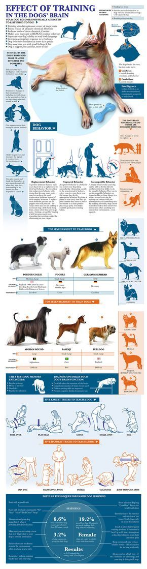 Benefits of Obedience Training for Dogs Infographic. Topic: dog training, psychology, dog behavior, puppy crate training, housebreaking,