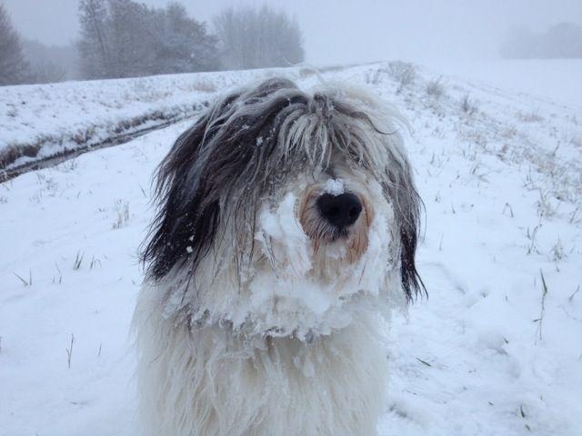 SchneePon Cally
