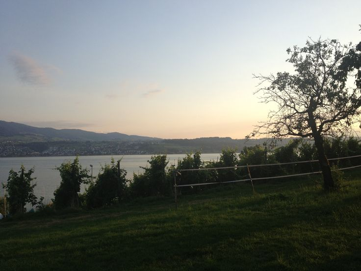 View moschti Stäfa, vineyard, lake