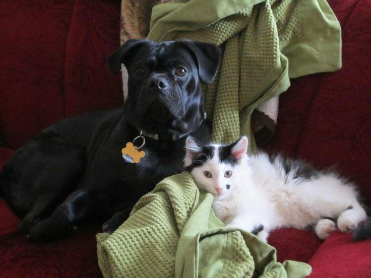 UNA STORIA CHE HA DELL'INCREDIBILE E CHE CI FORNISCE COME SEMPRE UN INSEGNAMENTO IMPORTANTE. LORO SANNO AMARE MOLTO PIU' DI NOI  Cane adotta un gatto appena nato e trovato incastrato sotto un tronco  Lo ha trovato per caso. E non lo ha voluto più lasciare solo. Questa è la bellissima storia di amicizia fra Opie, il cane, e Roscoe, il gatto, iniziata tre anni fa, quando il micio pesava pochi grammi e aveva un gran bisogno di aiuto.   E' così che Opie lo ha trovato, seguendo il suo olfatto…