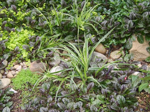 115 best images about dry creek beds and rock gardens on for Ornamental grass bed