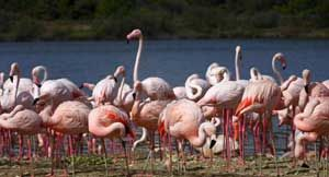 On 6 August, the Maharashtra government had issued a notification declaring the northern part of #ThaneCreek as #flamingosanctuary under Section 18 of the #Wildlife (Protection Act), 1972. This sanctuary will be the state's second marine sanctuary after the one at #Malvan. | http://goo.gl/9zjxiY
