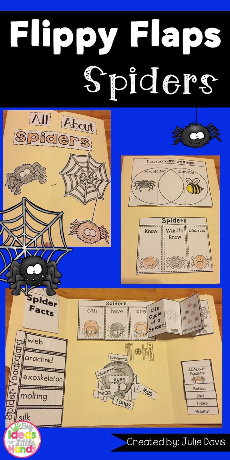 Spider Facts | Learn About Spiders