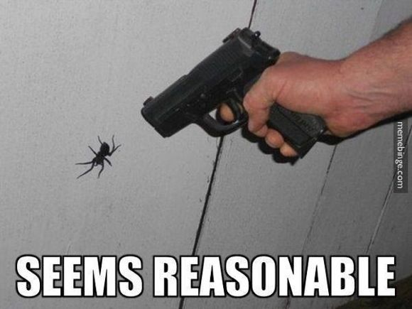 seems reasonable #funnyspider #lol