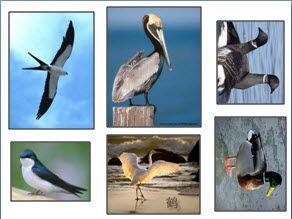 Γλωσσικό παιχνίδι για τα αποδημητικά πουλιά