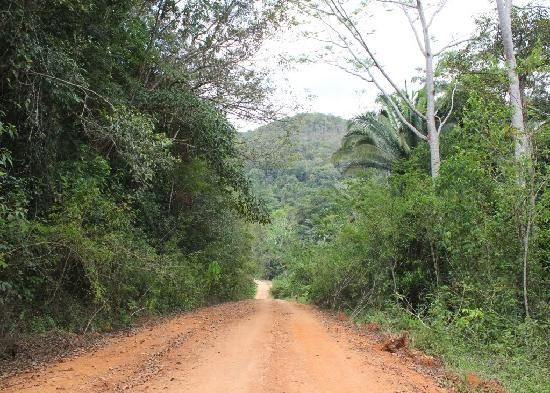 Road through Mountain Pine Ridge, on the way to Caracol