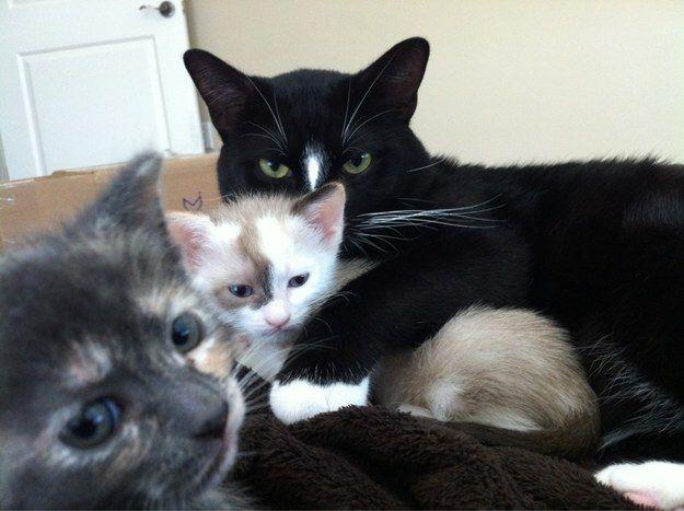 Ce père qui ne laisse personne trop proche de ses nouveau-nés. | 27 Pictures Of Cats That Will Warm Your Cold, Grinch-Like Heart