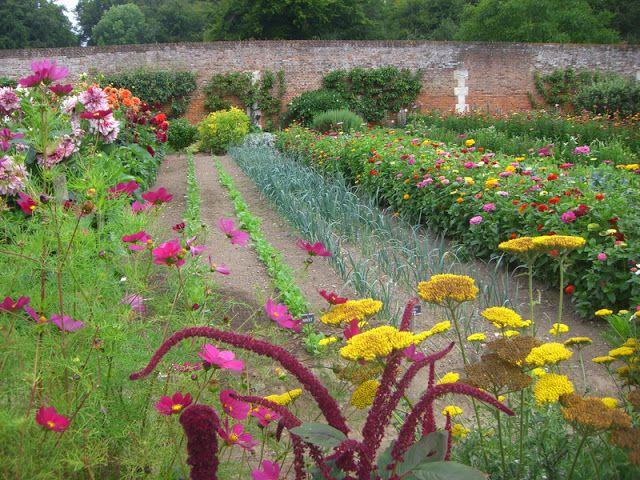 17 migliori idee su alberi da frutto per giardino su pinterest giardinaggio piantare un - Piante e alberi da giardino ...