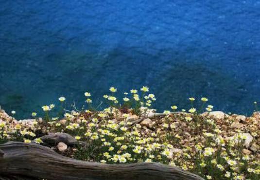 Η #Καίτη_Κακαβούλη ζεί στη Λευκάδα. Κατέχει απόλυτα την τέχνη της φωτογραφίας. Την βλέπεις να φωτογραφίζει άνθη, ανθρώπους, φύση, τοπία. Είναι μια σπουδαία καλλιτέχνης. ________________________________ Γράφει η Ιουστίνη Φραγκούλη – Αργύρη  #photos #artist #nature  #flower http://fractalart.gr/kaiti-kakavouli/