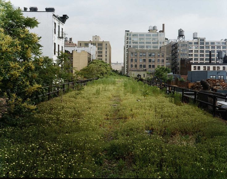 the high line, old train tracks converted into a park above #nyc.  must go.