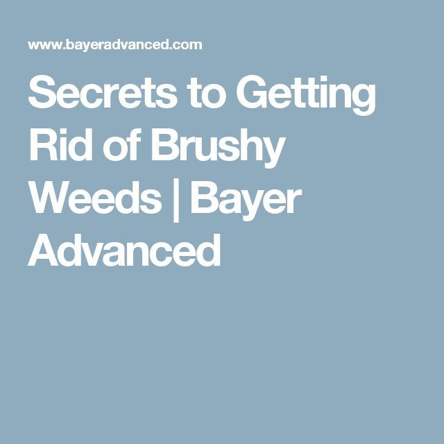 Secrets to Getting Rid of Brushy Weeds | Bayer Advanced