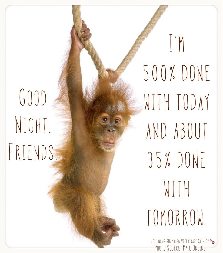 Tuesday Humor | Wednesday Funny | Tired | Long day | Long week ahead | Days dragging | Animal funny | Cute monkey: Good Night! I'm 500% done with today and about 35% done with tomorrow.  Hang in there, friends. The weekend is coming!  Sleep Well!!
