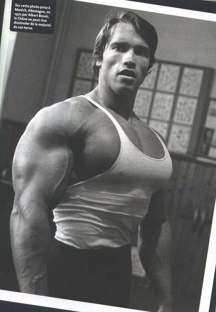 543 best Arnold Schwar...