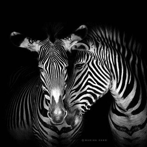 Lanzamos el concurso solidario 1 foto de tu Origami 1 euro desde el 24 al 31 de Marzo en Twitter @CanonEspana  http://bit.ly/2e98nbd 1. Entra en Creative Park 2. Imprime tu animal favorito bit.ly/Creative_Park 3. Móntalo y hazle una foto 4. Compártela con #FotosPorElPlaneta @CanonEspana @wwfspain 5. Explícanos por qué tu peque o tú mismo has elegido ese animal. Por cada participación en twitter que cumpla con todos los requisitos donaremos 1 euro a @wwfspain Además habrá premios para las 3…