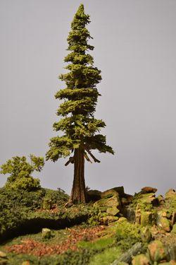 New Cedar Tree